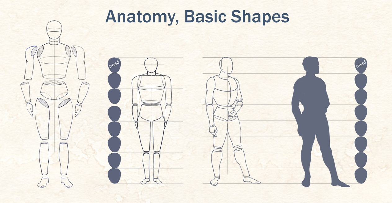 Anatomy Basic Shapes | free3DTutorials.com