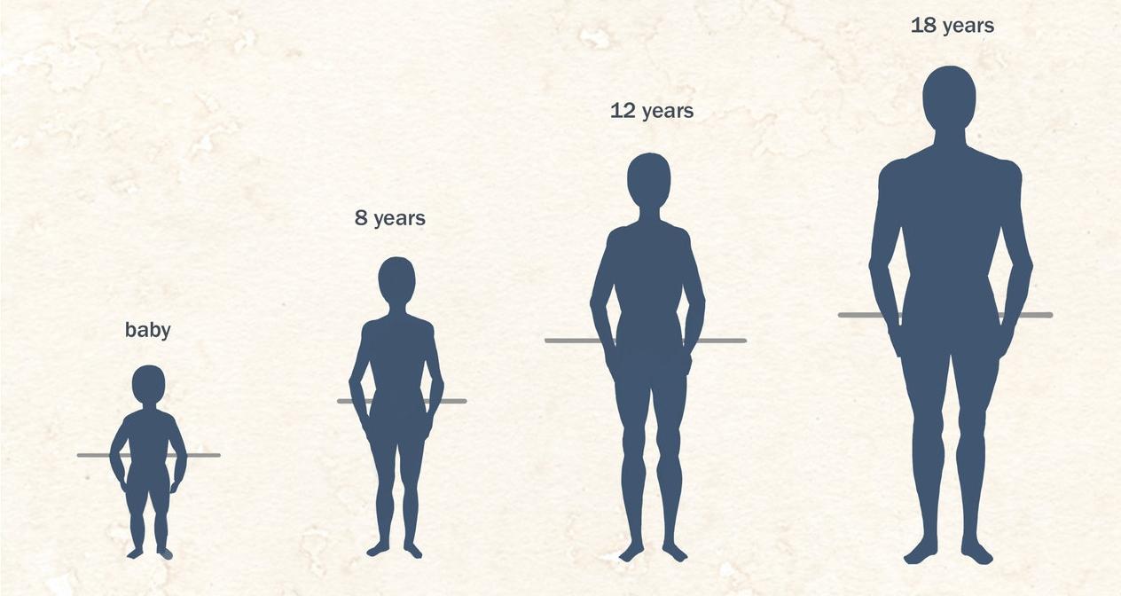 Ihor-Reshetnikov-Anatomy-Basic-Shapes